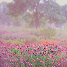 Jenny Rainbow - Monet Spring