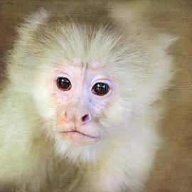 Trina  Ansel - Monkey Portrait
