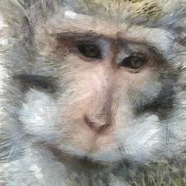 Sergey Lukashin - Monkey Bali