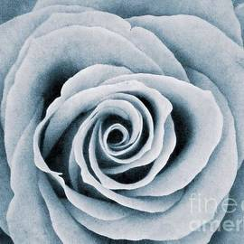 Joan-Violet Stretch - Monochrome Rose