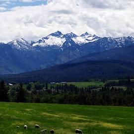 Joseph J Stevens - Montana Pasture