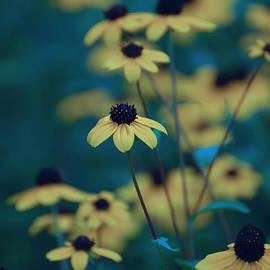 Jocelyn Ball - Moody Black Eyed Susan Flowers