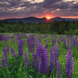 Michael Blanchette - Moody Sunrise over Lupine Field