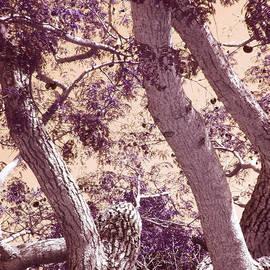 Ginny Schmidt - Moody Tree