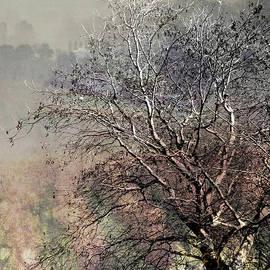 Jacklyn Duryea Fraizer - Moody Tree
