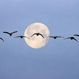 Adrian Campfield - Moon Flight