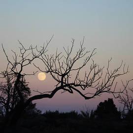 Valerie Loop - Moon in the Tree