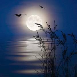 Nina Bradica - Moon Light Silhouettes