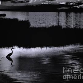 Robert McCubbin - Moon n Ma Bird 2