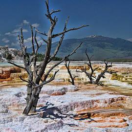 Allen Beatty - Moon on Earth - Yellowstone