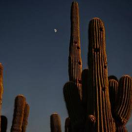 Debbie Yuhas - Moon over Saguaro
