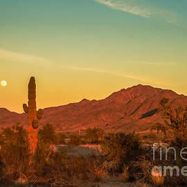 Robert Bales - Moon Over The Sonoran Desert