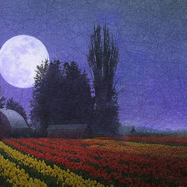 R christopher Vest - Moon Rise Over The Tulip Fields