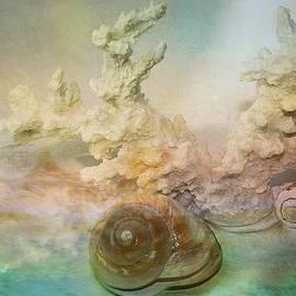 Shirley Sirois - Moon Snail