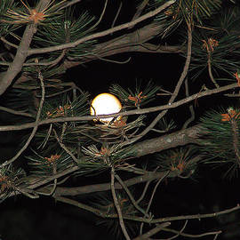 Aimee L Maher Photography and Art - Moon Through Pines