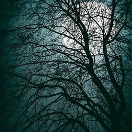 Carlos Caetano - Moonlight Forest