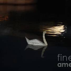 John Telfer - Moonlight Swan