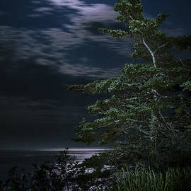 Marty Saccone - Moonlit Treescape