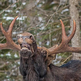 Steve Dunsford - Moose Teeth