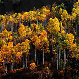 The Forests Edge Photography - Diane Sandoval - Morning Aspens
