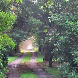 Lin Grosvenor - Morning Country Lane