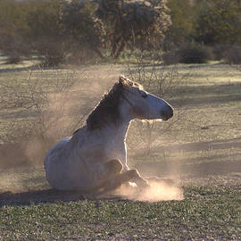 Ruth Jolly - Morning Dust Bath