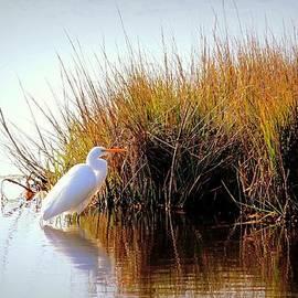 Rosanne Jordan - Morning Egret