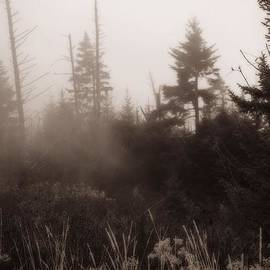 Dan Sproul - Morning Fog In The Smoky Mountains