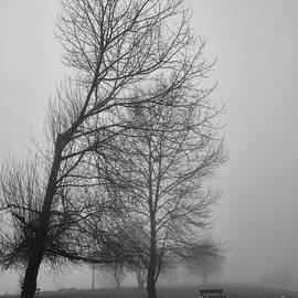 James Yang - Morning Fog