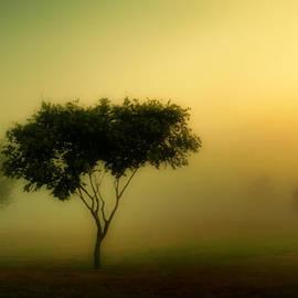 Matthew Yeoman - Morning Fog