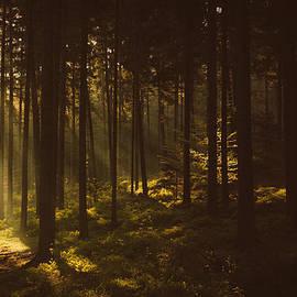 Tomas Hudolin - Morning forest