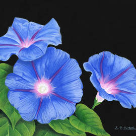 Sarah Batalka - Morning Glories On Black