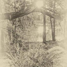 Margaret Palmer - Morning Glory