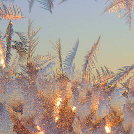 Kathy Barney - Morning Ice Crystals