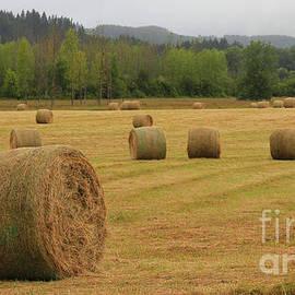 Kris Hiemstra - Morning in the Hay Field