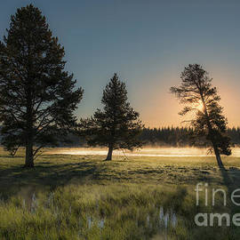 Sandra Bronstein - Morning Light in Yellowstone