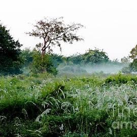 Amar Sheow - Morning Mist