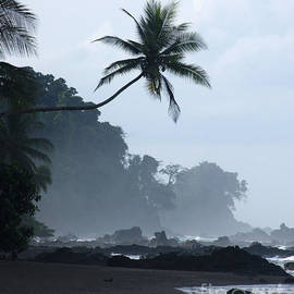 Rudi Prott - morning mist in Corcovado National Park