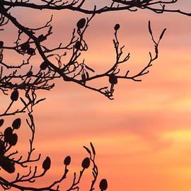 Rumyana Whitcher - Morning Palette