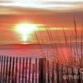 Kim Bemis - Morning Sandfire