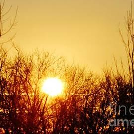 Don Baker - Morning Sun 1