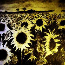 Jose A Gonzalez Jr - Morning Sunshine On a Field of Sunflowers