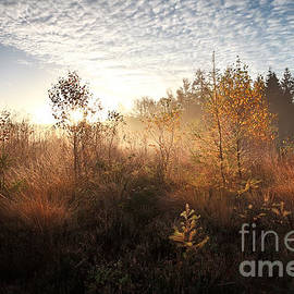 Olha Rohulya - Morning Sunshine Over Autumn Swamp With Birch Trees