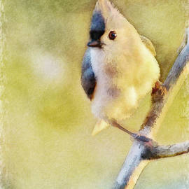 Debbie Portwood - Morning Tufted Titmouse - Digital Paint with Frame