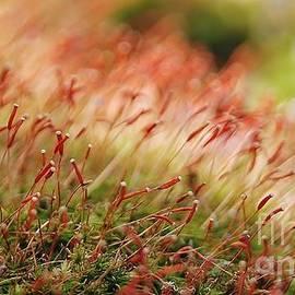 Gene Mark - Moss Abstract