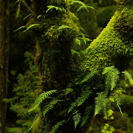 Jeff  Swan - Moss And Ferns Growing On A Tree