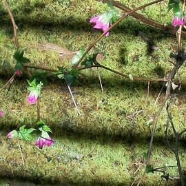 Moss and Sharp Pinks