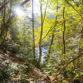 Debra and Dave Vanderlaan - Mossy Forest Path