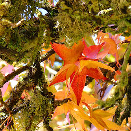 Baslee Troutman Nature Photography Art - Mossy Lichen Tree Leaves Art Prints Autumn
