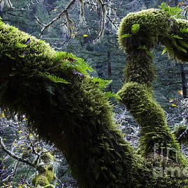 Bob Christopher - Mossy Oak Columbia River Gorge 1